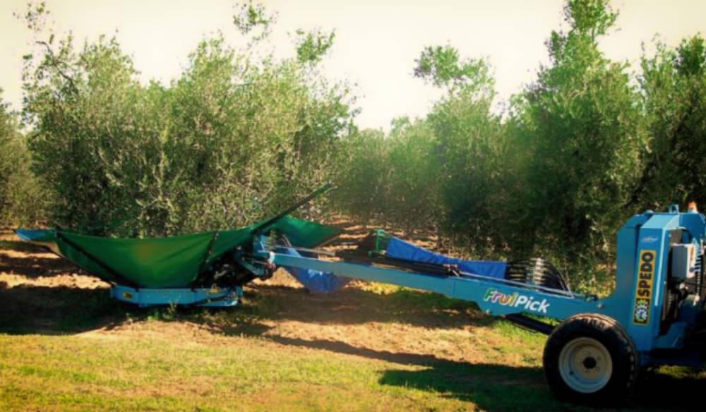 spedo fruipick racoclta olive